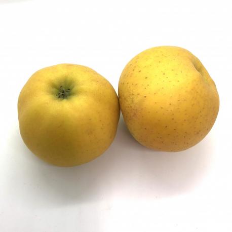 Manzana chantecler