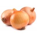 Cebolla Buty