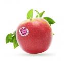 Manzana Pink Lady